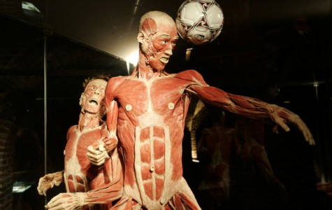 Field Trip to Body Worlds Brings Forensics Into the Third Dimension